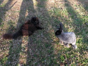 April Rabbits 023